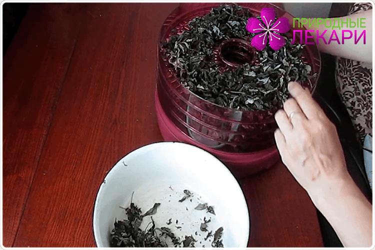 сушим иван-чай