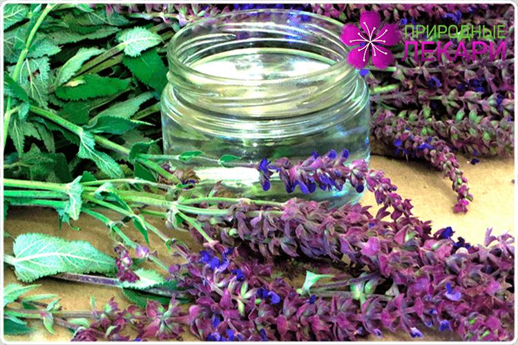 фиолетовый шалфей